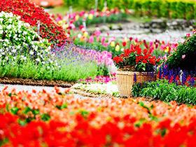 繁花似锦 15款美丽花园图片