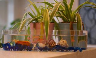 清新鱼缸图片