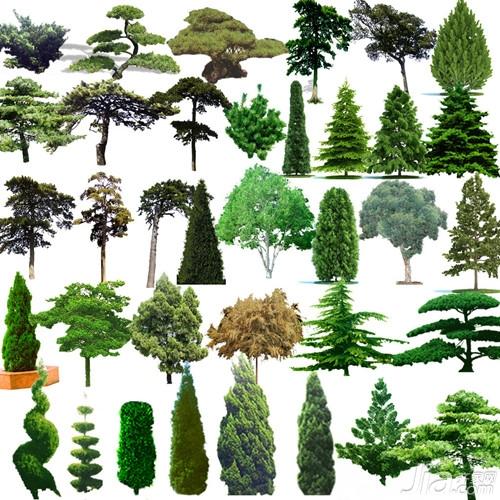 松树的类别 松树的种类有哪些