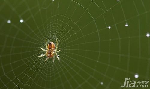 梦见蜘蛛爬到自己脸上是什么意思