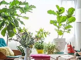 12个绿植角落 植物最养眼