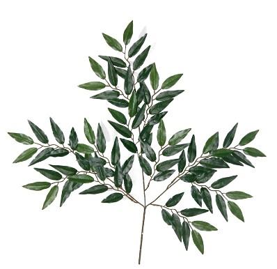 桉树叶的功效与作用看了直接受用