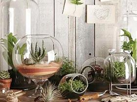 玻璃才是绿植最好的家 10个玻璃绿植设计