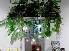 綠色搭配你家 11個客廳植物擺放效果圖