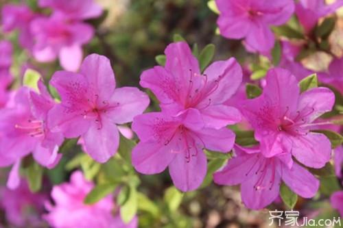 各种盆栽花卉名称及图片欣赏大全