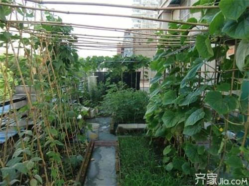 """阳台上种菜如何选择 打造""""家庭开心农场"""""""