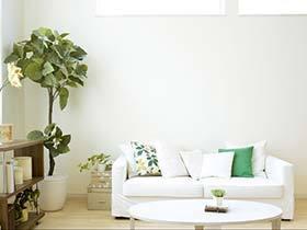 有植物的房子才是家  10款室内植物摆放图片欣赏