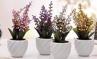 春季赏花不用挤?这些花儿在家就可以养!