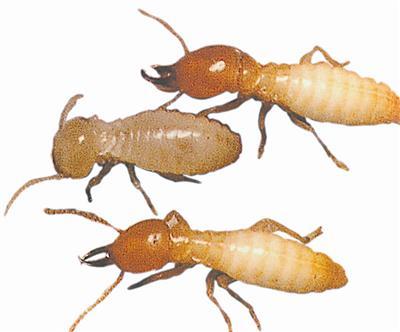 吃白蚁的动物的照片