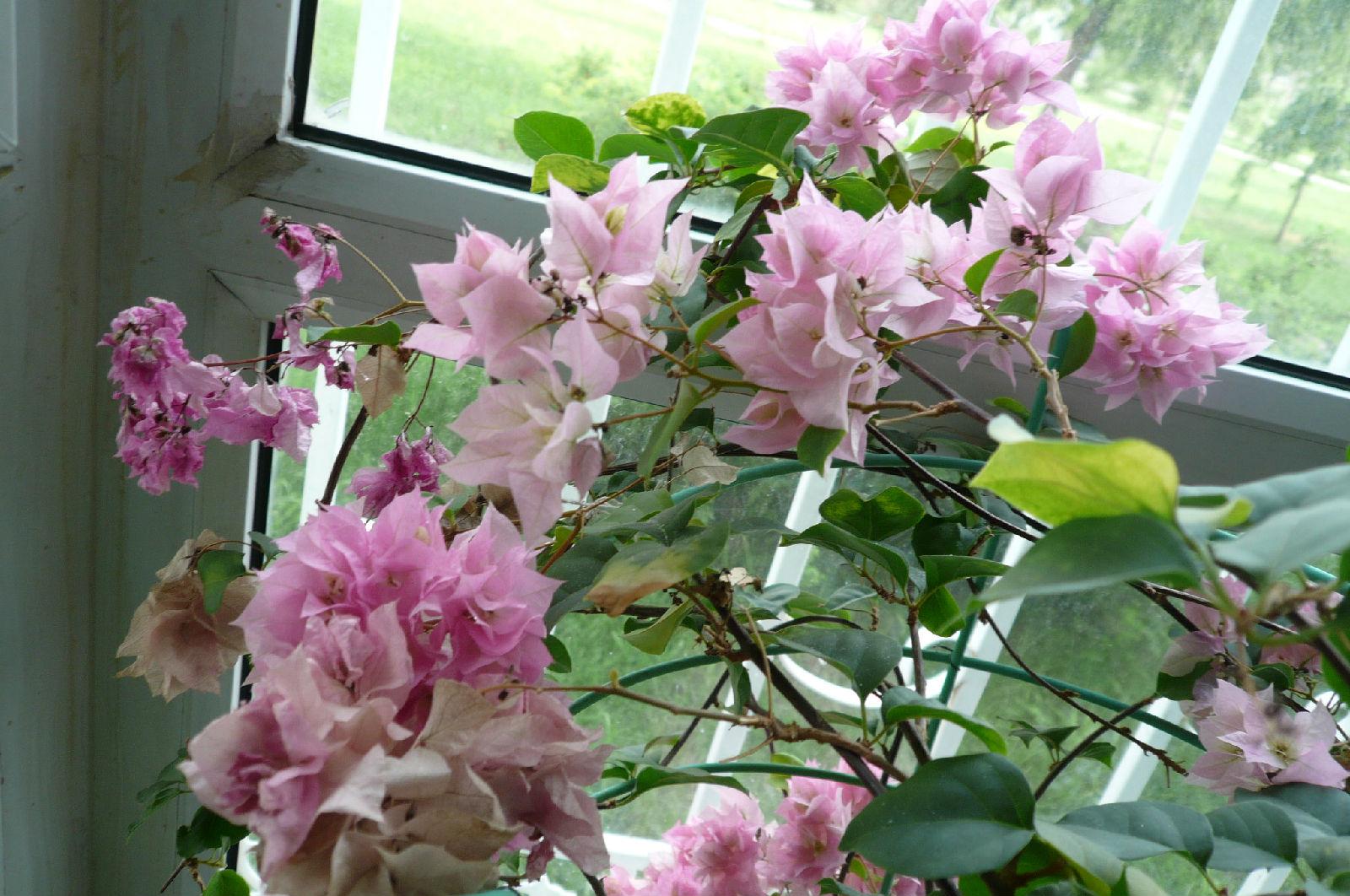 各种家养花的-过多修剪.三忌、什么都养,养花是讲究慢养的,有些养花者在养花的
