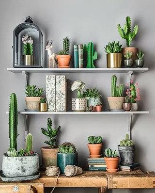 室内植物墙面置物架