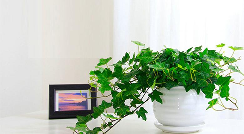 室内植物摆放风水重要吗 它的风水禁忌有哪些