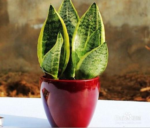 盘点能够净化空气的室内植物有哪些