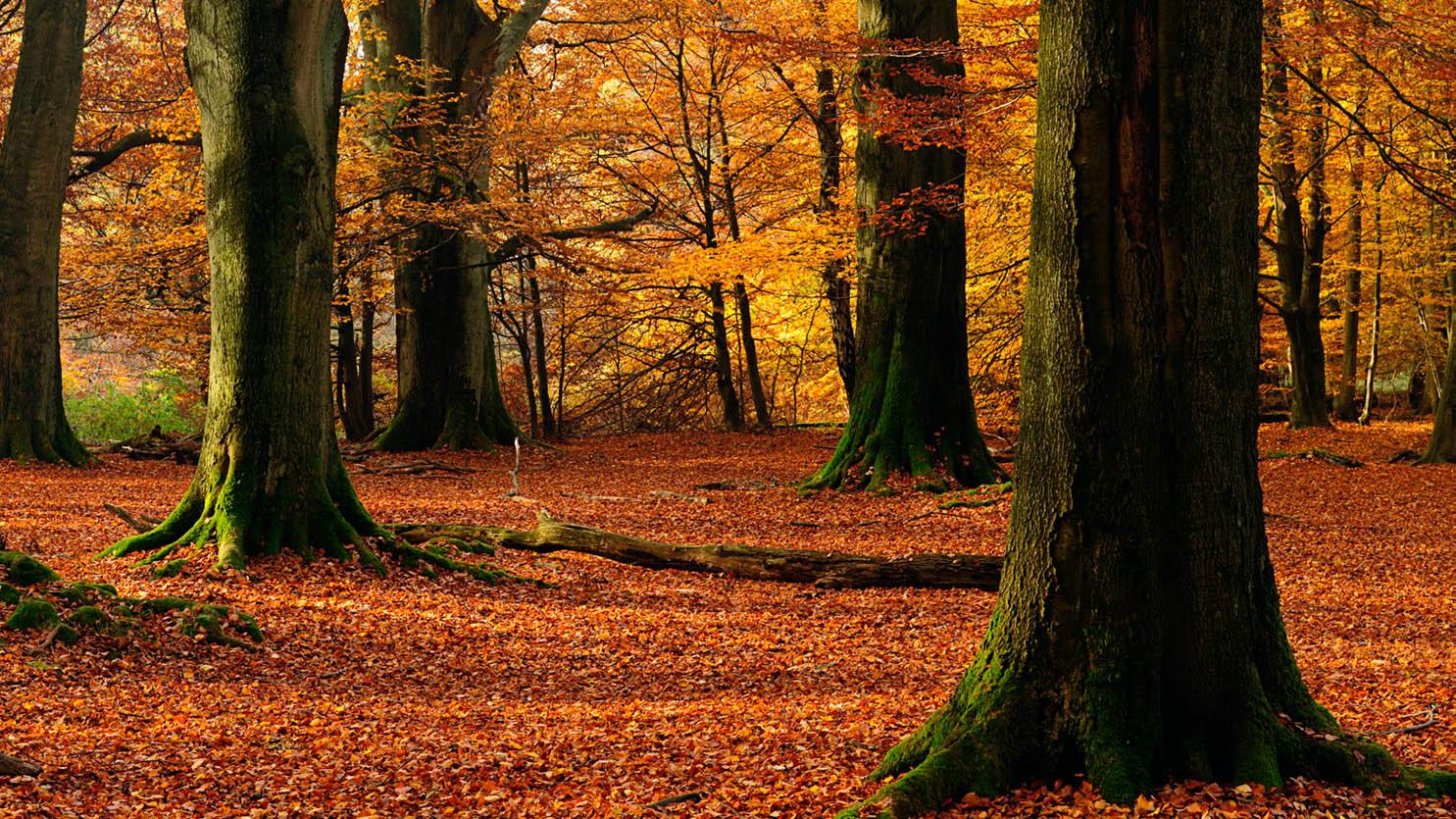 壁纸 风景 森林 桌面 1485_835