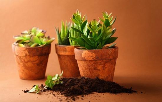 各种室内盆栽的功效 室内盆栽摆放有哪些禁忌