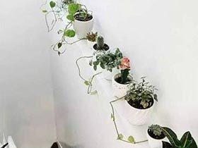 足不出户的美  10款室内植物背景墙图片