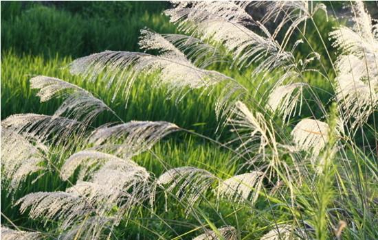 能够净化水质的水生植物有哪些