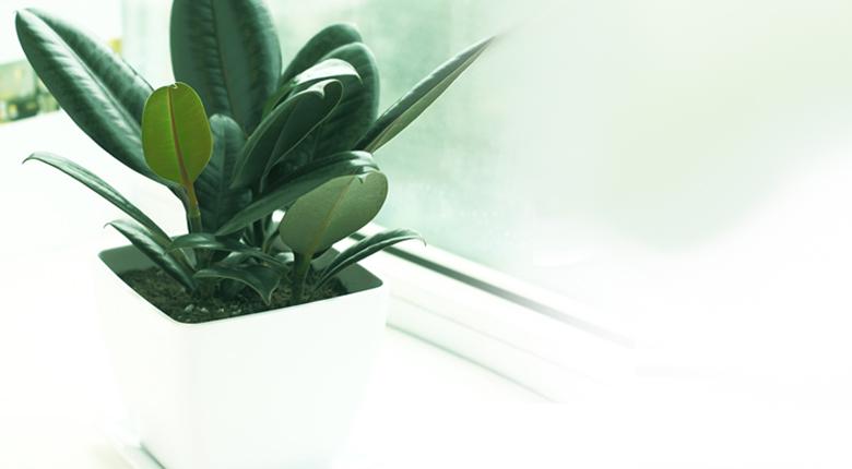 喜阴的室内植物有哪些