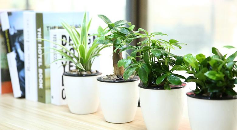 室内摆放植物有哪些 室内植物哪种好