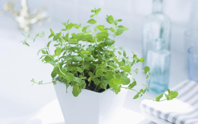 室內盆栽花卉好養么 養護方法有哪些