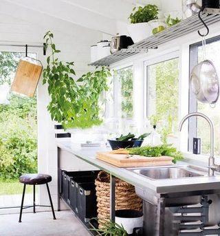 室内植物摆放图片