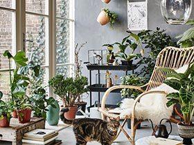 植物延伸的美  10个家居植物摆放效果图