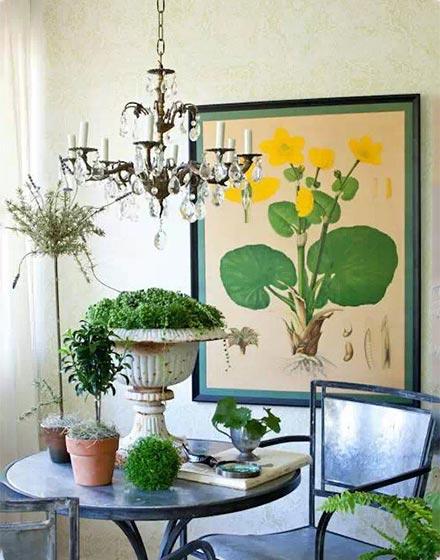 植物家居装饰片图片