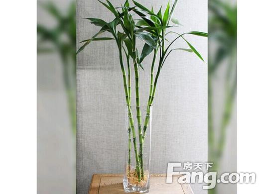客厅摆放什么植物旺财,客厅植物风水禁忌