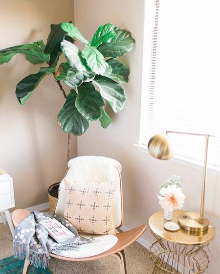 清新室内植物效果图