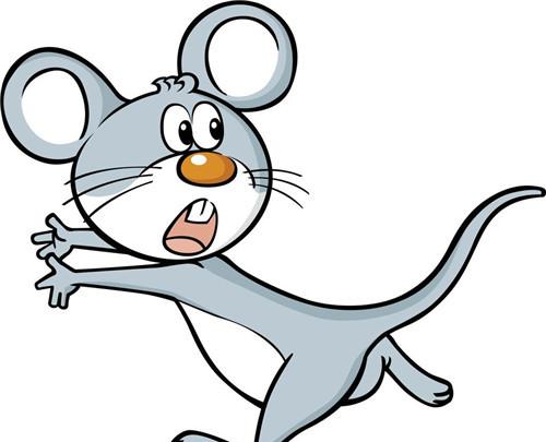 十二生肖婚配里面老鼠可以配兔子吗