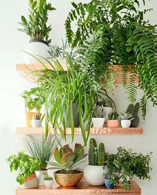 清新绿植摆放阳台效果图