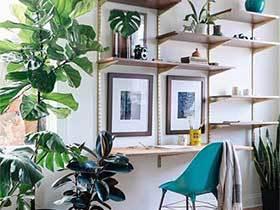 绿意浓浓留心中  10款室内植物摆放图片