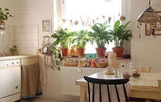 厨房适合摆放什么植物