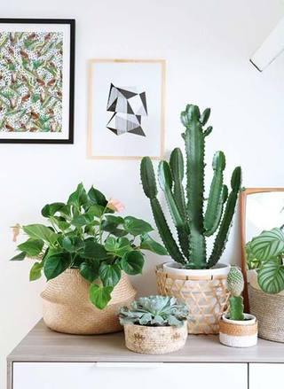 室内植物摆放装修装饰效果图