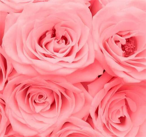 梦见吃玫瑰花是什么意思