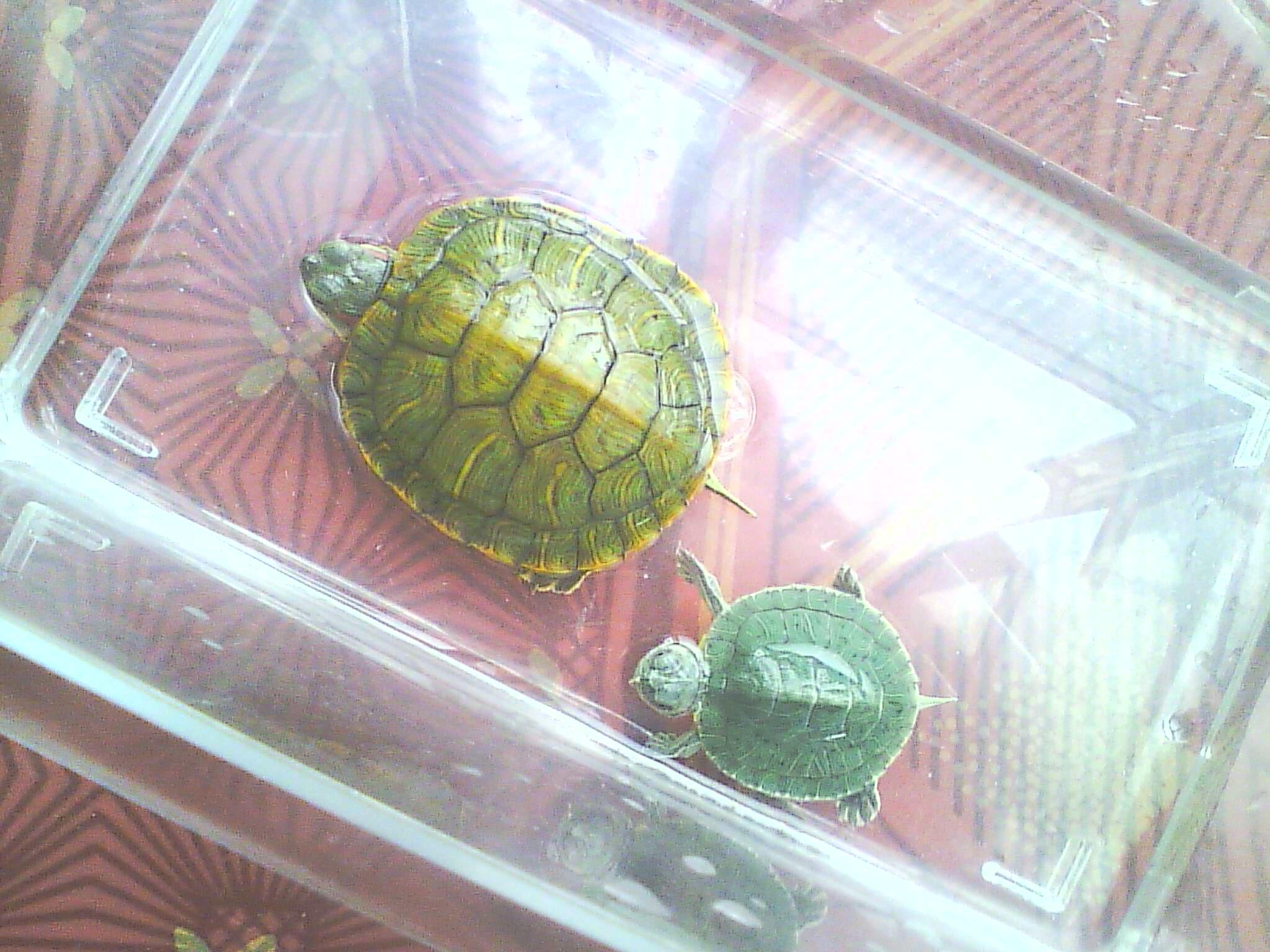 乌龟的饲养方法 教你怎样正确的养乌龟