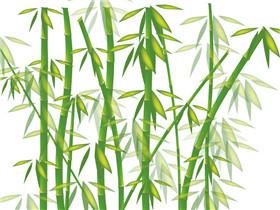 翠竹的象征意义有几种 翠竹有哪些价值