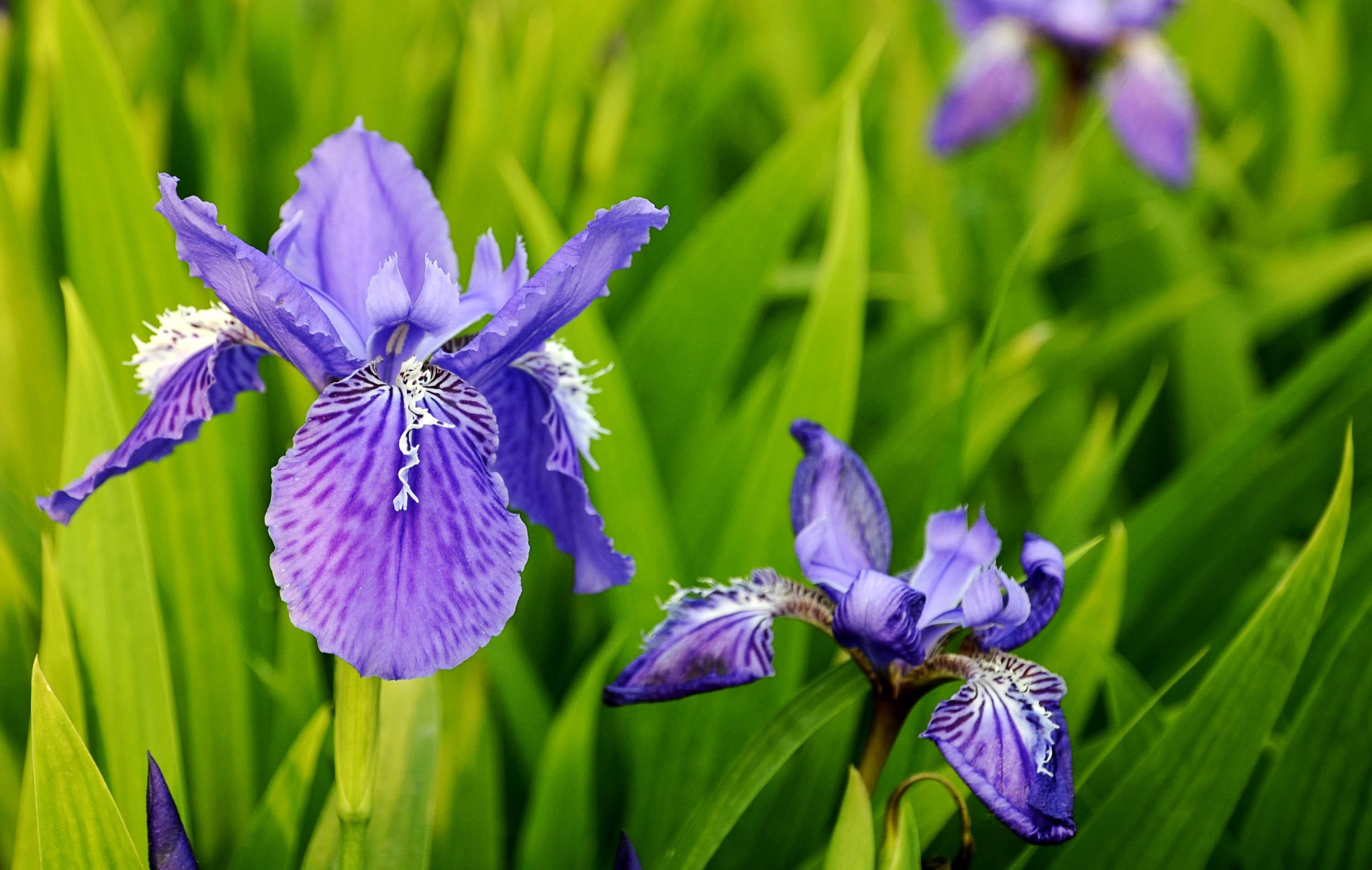 春天有什么花开 常见的盛开在春天的五种花朵