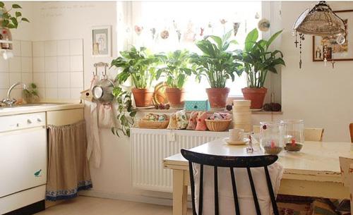 室内植物选择注意事项 要美丽也要健康
