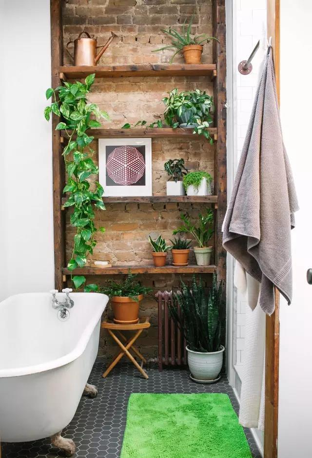浴室中放置什么植物最好,这样的浴室你肯定没见过