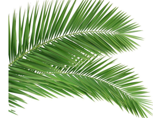 棕榈叶的寓意 如何用棕榈叶折玫瑰花图片