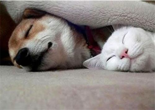可爱小猫捉老鼠睡觉图片